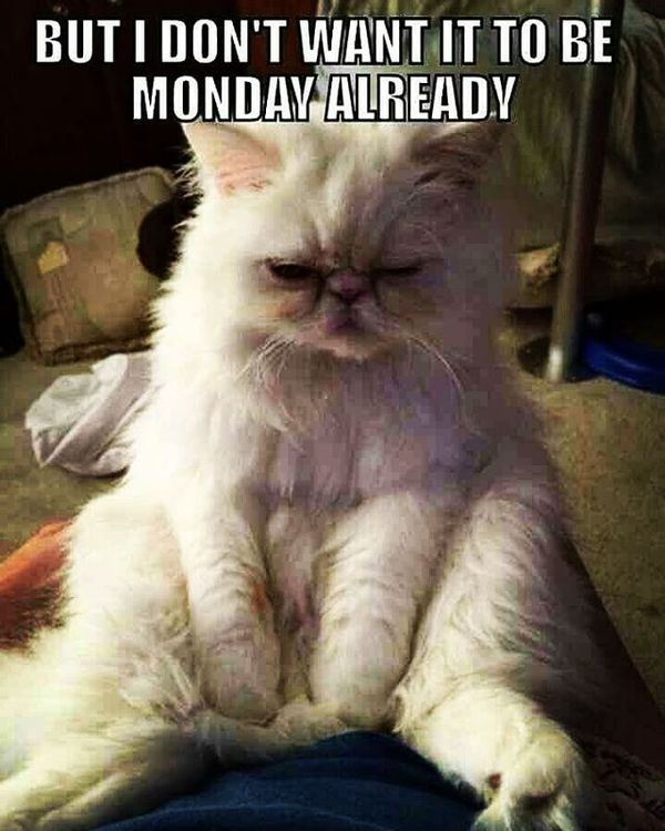 but I don't want to be Monday meme