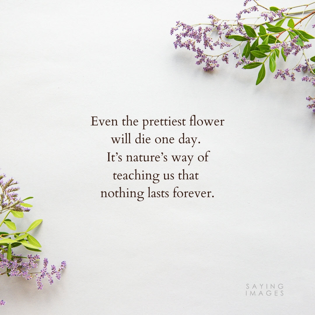 flower forever quotes