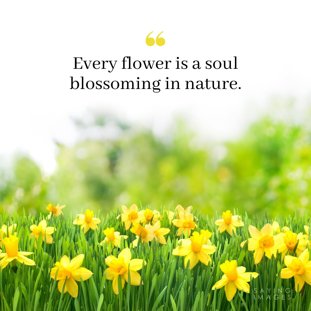 flower nature quotes