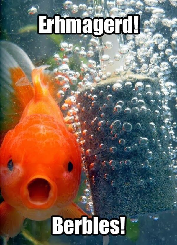 Fresh funny fish pictures with captions