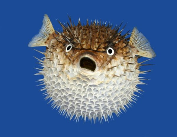 Remarkable funny pictures of fish