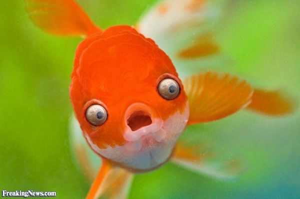 Magnificent funny pictures of fish