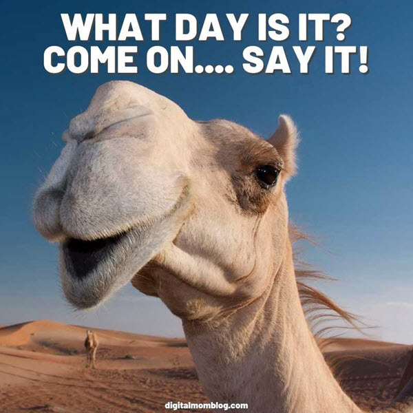 what day is it come on say it meme